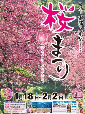 第36回 本部八重岳 桜まつり