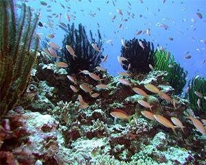 3月5日珊瑚の日